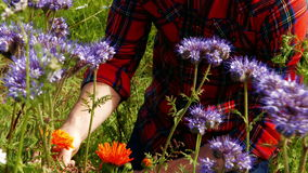Man looking at various flowers. In the field 4k stock footage