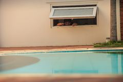 Man Looks out of Building Window at Swimming Pool. Man looks out of pale pink building low window at swimming pool with azure water in resort city Stock Photo