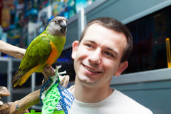 Man looks at Senegal parrot royalty free stock photography