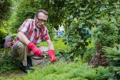Man loosen the soil Stock Photos