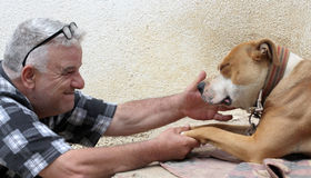 Man loving american staffordshire terrier dog Stock Images