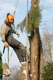 Man lowering a section of tree Stock Photography