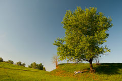 Man lying under the tree on sunny spring day Stock Photo