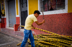 Man with machete chopping sugarcanes in typical Ecuadorian charming city street Stock Photography