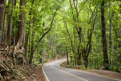`Man-Made Forest`, Bohol - Philippines Stock Photo