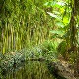 Man-made jungle Stock Photos