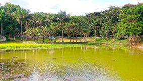 Man-made lake on the park. Lushful green trees around a man-made lake on a public park that cater as the rain basin of the area as it is surrounded by hills royalty free stock photo