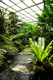 Man made nature look park garden with tropical look Royalty Free Stock Photo