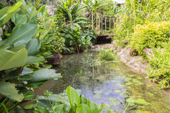 Man-made small river in garden Stock Photography