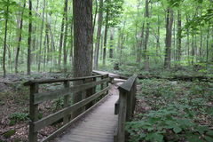 Man-made Walkway. A wooden, man-made walkway in the deep woods to keep your feet from getting muddy Stock Images