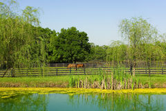 A man-made watering hole for horses in florida Stock Photos