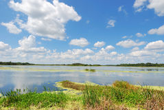 Man-made Wetlands- Orlando Wetlands Park #3 Stock Photos