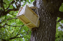 Man made wooden hive up on a old oak tree Stock Image