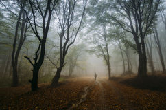 Man in magical enchanted fantasy forest with fog. Man walking on path in an enchanted fantasy forest with fog royalty free stock photography
