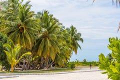 MAN MALDIVERNA - NOVEMBER 18, 2016: Sikt av den trevliga tropiska stranden med kokosnötpalmträdet, Maldiverna öar Kopiera utrymme Royaltyfri Foto
