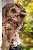 Man with the mask of a creepy scarecrow. Looking through a window stock image