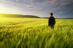 Man in meadow green meadow stock images