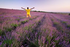 Man in meadow of lavender. Emotional scene stock images