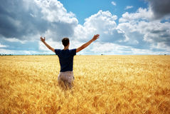 Man in meadow of wheat Royalty Free Stock Image