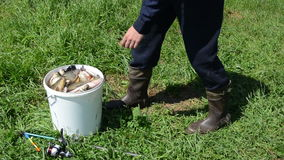 Man measure bream. Man with the rubber boots takes a big bream from bucket and spit his gills measure the weight stock video