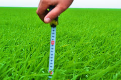 Man measures the length of the grass. Man measures how high is the grass Stock Photography