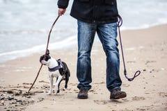 Man med Boston Terrier royaltyfri bild