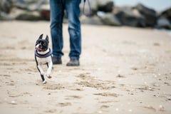 Man med Boston Terrier Royaltyfri Foto