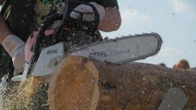 Man med chainsawen som klipper trädet Chainsaw som klipper vedträ För chainsawblad för närbild yrkesmässig journal för klipp av t stock video