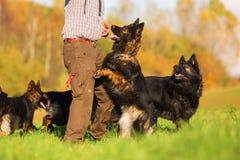 Man med den gamla tyska herden Dogs Royaltyfria Bilder