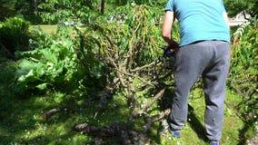 Man med filialer för träd för chainsawklippning stupade dekorativa i trädgård gimbal lager videofilmer