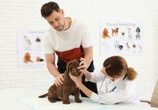 Man med hans husdjur som bes?ker veterin?ren Unders?kande labradorvalp f?r Doc arkivbilder