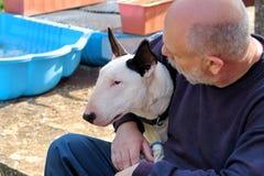 Man med hunden EngelskaBull terrier vit hund i företag med hans ägaresammanträde och tycka om i den trädgårds- utomhus- och dalta royaltyfri bild