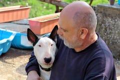 Man med hunden EngelskaBull terrier vit hund i företag med hans ägaresammanträde och tycka om i den trädgårds- utomhus- och dalta arkivfoton