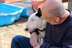 Man med hunden EngelskaBull terrier vit hund i företag med hans ägaresammanträde och tycka om i den trädgårds- utomhus- och dalta arkivbild