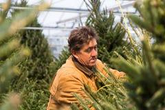 Man med julgranar i växthus arkivbild