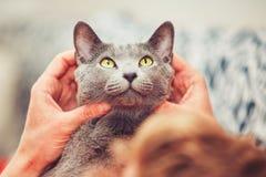 Man med katten Arkivfoto