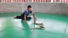 Man med kobran på ormshowen i Thailand stock video