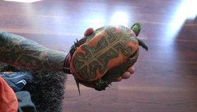 Man med tatueringar som rymmer sköldpaddan Arkivbild