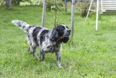 Man& x27 ; meilleur ami de s, animal familier, chien drôle, animal intelligent, Images libres de droits