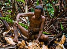 Man Mentawai tribe produces larval beetles in the sago palm. MENTAWAI PEOPLE, WEST SUMATRA, SIBERUT ISLAND, INDONESIA – 16 NOVEMBER 2010: Man Mentawai stock images