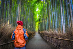 Man solo traveler standing from the back in the middle of a bamboo forest in Japan. Male solo traveler and adventurer standing from the back wearing orange and Stock Photography