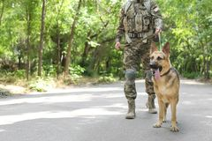 Man in military uniform with German shepherd dog. Outdoors Stock Image