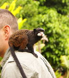 Man with a monkey on his shoulder Stock Images