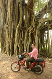 Man On Moped. A man on his moped behind the banyan tree Royalty Free Stock Photo