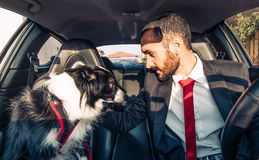 Man motivate his dog before canine competition. In the car. Concept about animals and people Royalty Free Stock Photography