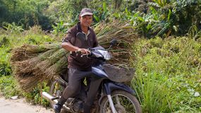 Man on motorbike with sheaf of grass Royalty Free Stock Photo