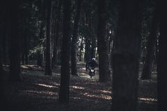 A man on a motorcycle rides in the woods between the trees. Light and shade. Landscape royalty free stock photography