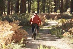 Man mountain biking through a forest, back view Stock Photo
