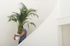 Man moving house, carrying large pot plant down staircase, face obscured, profile Stock Photos