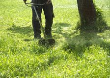 The man mowing green wild grass field using brush cutter mower or power tool string lawn trimmer. To mow a grass with the trimmer. Trimer mows a lawn. Care of Stock Image